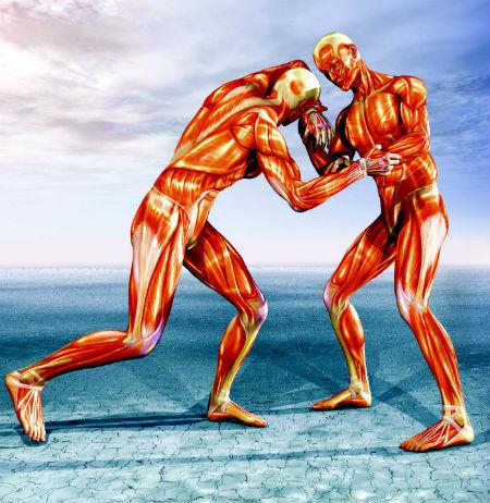 Костные, суставные и фасциальные структуры – обеспечивают кинематические соединения и конвертируют работу мышц в опорные и двигательные функции.